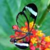 Притча за пеперудата и смисъла на трудностите в живота ни