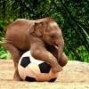 """За да успееш, трябва да опиташ пак! – Хорхе Букай, """"Окованият слон"""""""
