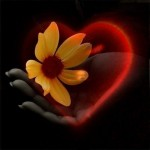 heart-Love-heart-hearts_large